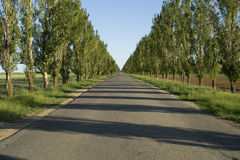 Road to perspective in summer day Royalty Free Stock Photography