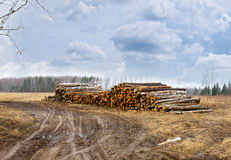 Road to the pile of timber harvesting Royalty Free Stock Photography