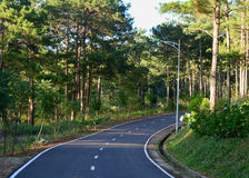 The road to pine tree forest in Dalat, Vietnam Royalty Free Stock Photography