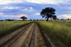Lonely desert road through grassland. A lonely desert road through a riverbed with grassland in an African national park Stock Photo