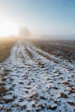 The road to the rural home in the morning fog. Royalty Free Stock Photography