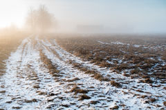 The road to the rural home in the morning fog. Royalty Free Stock Images