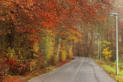 Road to rusty colorful autumn forest Stock Photo