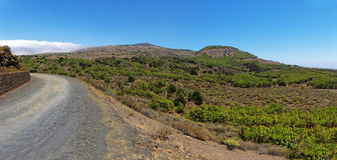 A road to the Sabinar in El Hierro. A gravel road to the Sabinar in El Hierro. Canary island, Spain royalty free stock photography