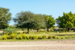 Road to Safari Park on Sir Bani Yas Island, Abu Dhabi, United Arab Emirates.  royalty free stock image