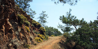 Road to Sazak Bay. Pine-trees and rocks - vintage effect. Stock Photo