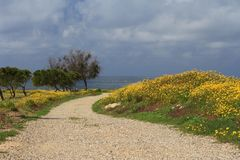 The road to the sea in Paphos. Cyprus. Spring Stock Photography