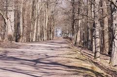 The road to the sea in the park. The road to the sea in the spring park Royalty Free Stock Images