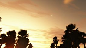 Road to the sea silhouette of palm trees stock footage