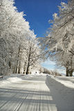 Road to a snow. Solar winter morning in a wood Royalty Free Stock Photography