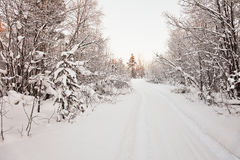 Road to snow-covered wood - northern landscape Royalty Free Stock Photos