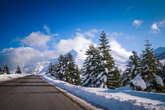 Road to the snow forest Stock Photography