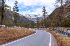 Road to the snow mountain with pine forest. Stock Photography
