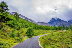 Road to the snow mountain with pine forest Royalty Free Stock Photography