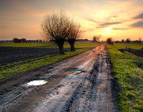 Road to the sun. The sunset with beautiful sky and two trees Stock Photos