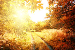 Road to the sun in autumn forest Stock Images