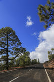 The road to the top of the volcano, surrounded by pine trees. Royalty Free Stock Photography