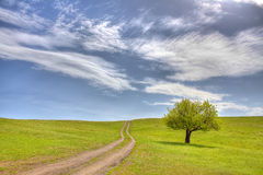 The road to tranquility. Lonely tree. Green meadow. Blue sky with light clouds Stock Photos