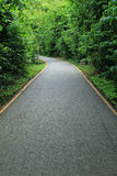 Road to tropical forest Stock Image