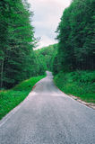 Road to the unknow in the green forest Royalty Free Stock Photography