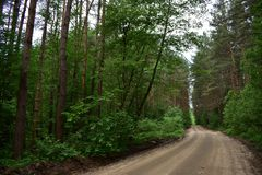 The road to the village through the forest is a quiet secluded place in a picturesque environment of mostly coniferous forest. A walk in the coniferous forest royalty free stock images