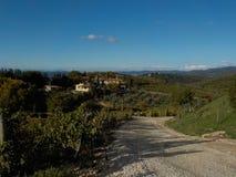 Road to vineyard Stock Image