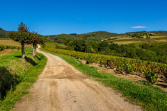 The road to vineyards Stock Images