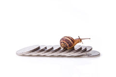 Road to wealth, Snail crossing over shiny coins Stock Photography