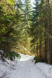 Road to the wilderness of the winter coniferous forest stock images