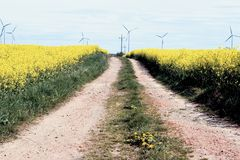 Road to wind turbines. A country road leading across a field of yellow flowers. Several wind turbines in the background Stock Images