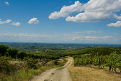 Road to wine Royalty Free Stock Photography