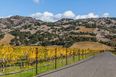 Road to the wineries. A road to the wineries is enhanced with colorful landscapes of vines during autumn month in the wine county, Napa California Royalty Free Stock Photography