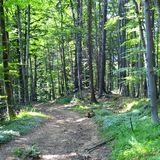 Pathway in the forest. Road to Poiana Brasov Royalty Free Stock Images