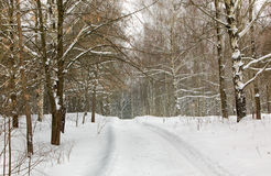 Road to winter wood Royalty Free Stock Photo
