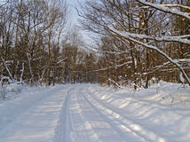 Road to winter wood Royalty Free Stock Images