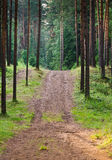 Road to a wood Stock Photography