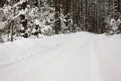 Road to wood (winter) Royalty Free Stock Images
