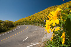 The road to yellow flower mountain. At Mae Hong Son province Thailand Royalty Free Stock Photo