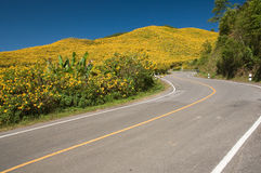 The road to yellow flower mountain Royalty Free Stock Images