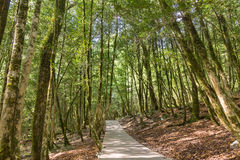 The road to the yew-boxwood grove on the Eastern slope of the mountain Royalty Free Stock Image