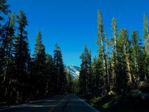 The Road to Yosemite Through the Trees. An empty road near Yosemite National Park in California lined with trees leading to a snow capped mountain stock photos