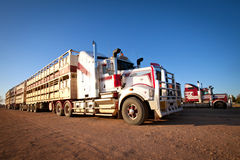 Road Train Cattle Trucks of Outback Australia Stock Photo