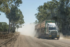 Road train on outback unsealed road. Semi-trailer road train truck carrying cattle driving on dusty unsealed outback road Australia Stock Photo