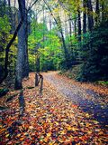 The Road Less Travelled. A leaf covered drive, flanked with beautiful trees and fall foliage Stock Photo