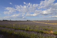 Road Traversing Infinite Rows Of Lavender With A Sky With Precious Clouds In A Brihuega Meadow. Nature, Plants, Odors, Landscapes. September 8, 2018. Brihuega royalty free stock photos