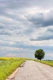 Road and  tree Stock Photos