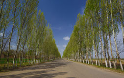 Road with tree Royalty Free Stock Photo