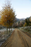 Road with tree in autumn Royalty Free Stock Photo