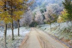 Road with tree in autumn Royalty Free Stock Image