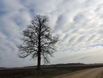 Road , tree and beautiful cloudy sky in morning, Lithuania Stock Images